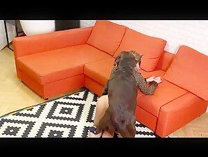 Veronica Silesto leopard party - ZoofiliaLovers - Videos de Zoofilia